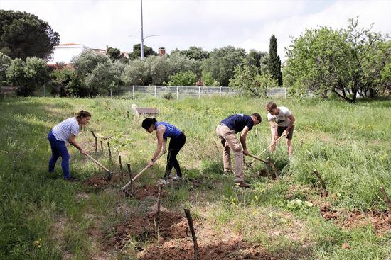 Des étudiants de l'UPVD travaillant sur le domaine agricole du campus